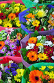 Colorful gerber flowers on display - PhotoDune Item for Sale