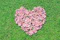 Pink flowers heart over green grass - PhotoDune Item for Sale