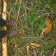 Overhead of man boots treading a pine log. - PhotoDune Item for Sale