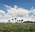 Florida Wetlands - PhotoDune Item for Sale