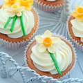 Daffodil cupcakes - PhotoDune Item for Sale