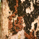 Termites on trees - PhotoDune Item for Sale