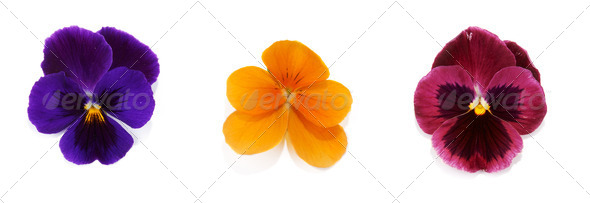 Four flower with petal - Stock Photo - Images