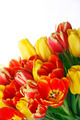 Bouquet of yellow and red tulips - PhotoDune Item for Sale