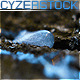 Camera Following Water Drop on the Tree Trunk - VideoHive Item for Sale