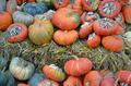 Pumpkins in autumn - PhotoDune Item for Sale