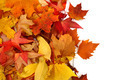 autumnal leaves background - PhotoDune Item for Sale