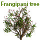 Frangipani Tree - 3DOcean Item for Sale