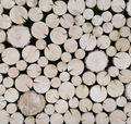 Cut wood logs background - PhotoDune Item for Sale