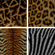 Wild Animal Mosaic Backgrounds - GraphicRiver Item for Sale
