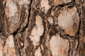 Tree Bark Macro - PhotoDune Item for Sale
