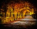 Autumn alley - PhotoDune Item for Sale