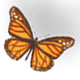 Monarch butterfly - ActiveDen Item for Sale