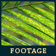 Green Leafs 10 - VideoHive Item for Sale