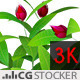 Plant Red Flowers - VideoHive Item for Sale
