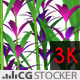 Plant Purple Flowers - VideoHive Item for Sale