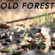 Old Forest - VideoHive Item for Sale