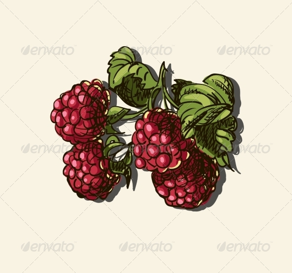 GraphicRiver Illustration of Raspberries 7159704