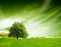 Springtime nature - PhotoDune Item for Sale
