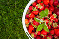 Pail of fresh strawberries on green grass - PhotoDune Item for Sale