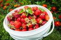 Pail of fresh strawberries in garden - PhotoDune Item for Sale