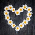 Daisy heart on dark wood - PhotoDune Item for Sale