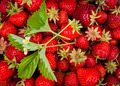 Fresh picked strawberries - PhotoDune Item for Sale