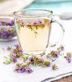 Fresh thyme tea - PhotoDune Item for Sale