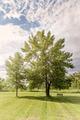 Trees in park - PhotoDune Item for Sale