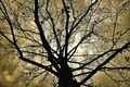 Tree in Silhouette - PhotoDune Item for Sale
