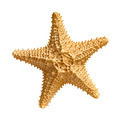 starfish isolated on white background - PhotoDune Item for Sale