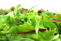 Fresh mixed lettuces, horizontal - PhotoDune Item for Sale