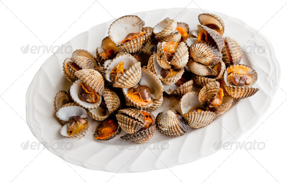 Little Sea Shell Cockles - Stock Photo - Images