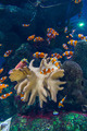 Clown fishes and zebrasoma yellow fish in aquarium - PhotoDune Item for Sale