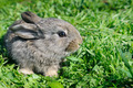 little rabbit on green grass background - PhotoDune Item for Sale