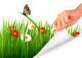 Spring background with flowers, grass and a hand - PhotoDune Item for Sale