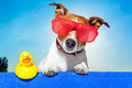 summer holiday dog - PhotoDune Item for Sale