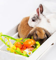 rabbits and easter basket - PhotoDune Item for Sale
