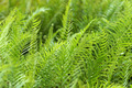 green fern growing in forest - PhotoDune Item for Sale
