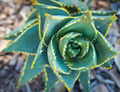 Abstract of Desert Succulent Outside. - PhotoDune Item for Sale