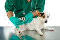 Veterinarian examines the dog's hip - PhotoDune Item for Sale