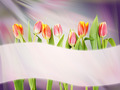 Bright abstract background with tulip flowers and banner - PhotoDune Item for Sale