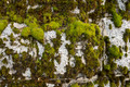 Old granite wall covered with moss and lichen - PhotoDune Item for Sale