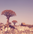 African tree - PhotoDune Item for Sale