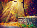 Fall. Autumnal Park. Autumn Trees in Sunlight Rays - PhotoDune Item for Sale