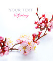 Spring Blossom. Apricot Flowers Border Art Design - PhotoDune Item for Sale