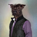 Hairless dog wearing a shirt and a jacket, colored background - PhotoDune Item for Sale