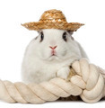 Rabbit wearing a hat and leaning on a rope - PhotoDune Item for Sale