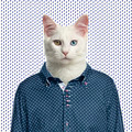 Cat wearing a spotted shirt, spotted background - PhotoDune Item for Sale