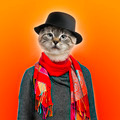 Cat wearing sweater, scarf and shirt, colored background - PhotoDune Item for Sale